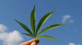 La mejor asesoría legal para el Cannabis Medicinal en Colombia con 613 Partners